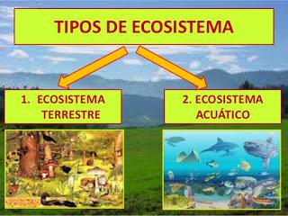 Los Ecosistemas Y Sus Clasificaciones Matemática Serie 23